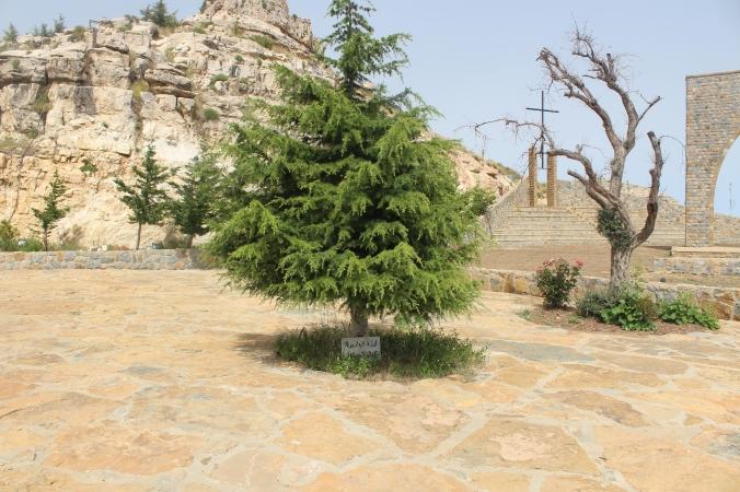 Cedar dedicate to the Patriarch Daniel Hadchiti